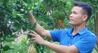 Thái Nguyên: Trang trại đa cây đa con, mỗi năm ông Chủ tịch đút túi 400 triệu
