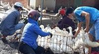Giá gia cầm hôm nay 17/10: Giá vịt thịt miền Bắc biến động nhẹ, gà thịt vẫn ế ẩm
