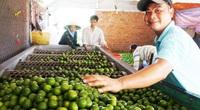 Long An: Đây là loài cây ra trái chi chít giúp nông dân thu lãi cả trăm triệu đồng/ha