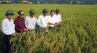 Trồng loại gạo nếp đặc sản hạt tròn như con ong này lợi nhuận gấp 3 lần trồng gạo tẻ, bao người tìm mua