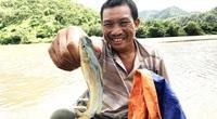 """""""Dị nhân"""" bắt cá chốt đặc sản kêu ẹc ẹc trên sông Ba mùa lũ, nhưng lạ nhất là ông này không biết bơi"""