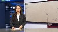 Bản tin thời sự Dân Việt 19/10: Lũ miền Trung chưa dứt, áp thấp nhiệt đới lại xuất hiện trên biển Đông