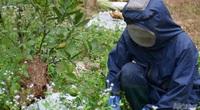 Bắc Giang: Ở đây có một nghề mới nghe nhiều người đã khiếp, nuôi ong kịch độc để lấy… thịt