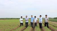 Cà rốt có thương hiệu, nông dân Bắc Ninh thu tiền tỷ