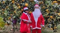 Bắc Giang: Du khách thích thú cưỡi xe trâu trải nghiệm vườn cam, bưởi tiền tỷ, quả sai trĩu cành