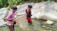 Cá suối ở Lào Cai tinh ranh, nhưng chị em phụ nữ ở đây vẫn bắt được hàng trăm con