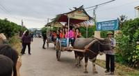 Trải nghiệm mới ở thủ phủ vải thiều: Du khách cưỡi xe trâu thăm vườn cam, bưởi