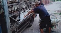 Giá gia cầm hôm nay 23/10: Giá gà, vịt thịt ba miền có xu hướng giảm nhẹ, vịt bán chậm