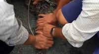 Cà Mau: Lại 1 con cá sấu xổng chuồng bò vào sân, dân hò nhau xúm vào vây bắt
