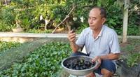 Ninh Bình: Chán nuôi cá cảnh chuyển sang nuôi ốc nhồi đặc sản, ao sạch, vườn đẹp, ông nông dân làm giàu như chơi