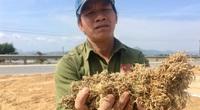 Trắng tay sau lũ lịch sử, nông dân Quảng Bình nói cần những thứ này nhất