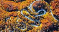 Sững sờ ngắm mùa thu vàng tuyệt đẹp trên cung đường 48 khúc cua