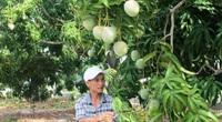 """""""Mách nước"""" nông dân trồng lúa vụ đông xuân"""