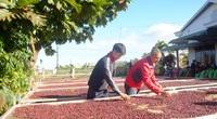 Giá cà phê xuất khẩu bất ngờ tăng nhẹ