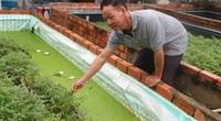 Độc đáo cách nuôi lươn trong bể lót bạt: Dưới thả lươn, trên trồng rau cần, nhìn đẹp mắt mà thu được nhiều tiền hơn
