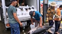 Khánh Hòa: Tránh bão số 9, tàu thuyền tấp nập vào ngờ, dân hối hả bán cá tôm trước giờ G