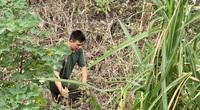 Người dân vạch từng bụi cây tìm kiếm nữ sinh Học viện Ngân hàng mất tích