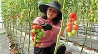 Lâm Đồng: Làm thế nào mà nông dân ở đây ngày càng giàu, trồng rau cũng thu 1 - 2 tỷ đồng/năm