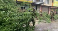 """Bình Định """"cấp tốc"""" dọn dẹp thiệt hại do bão số 9"""