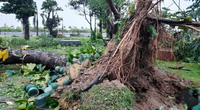 """Bình Định """"bay"""" gần 394 tỷ đồng, hàng nghìn nhà dân bị hư hỏng do bão số 9"""