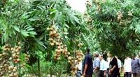Hà Nội có 1.000ha cây ăn quả ứng dụng công nghệ cao