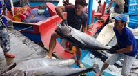 Hiếm có: Cá ngừ Việt xuất khẩu qua Italy tăng kỷ lục tới... 8.600%