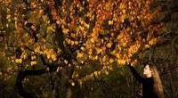 Đẹp nao lòng với cảnh sắc mùa thu ở những thành phố này
