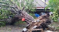 Quảng Nam: Bão số 9 cuốn bay hàng nghìn ngôi nhà và nhiều công trình hư hỏng nặng