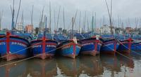 Bình Định: 14 ngư dân trên tàu đi cứu hộ an toàn, tiếp tục tìm kiếm 26 người mất tích