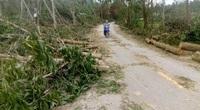 Quảng Nam: Cây cối đổ ngã khắp nơi, hoa trái rụng tơi tả đầy vườn, nước mắt nông dân chảy vào trong