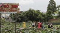 Bình Định: Sen nở trái mùa, thấy lạ bao nhiêu người đến xem và chụp ảnh