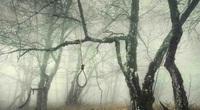 Khu rừng tự sát Aokigahara và những câu chuyện rùng rợn