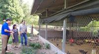 """Xây dựng được """"hàng rào"""" này, người nuôi gia cầm khỏi lo dịch bệnh"""