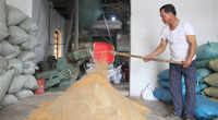 """Nam Định: Cả HTX nuôi cá VietGAP mỗi năm """"nhẹ nhàng"""" thu lãi khoảng 25 tỷ đồng"""