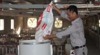 Các địa phương nỗ lực bảo vệ đàn lợn, lo bình ổn giá thịt lợn dịp Tết