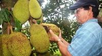 Bình Định: Ông nông dân này nuôi con gì, trồng cây gì  mà thu 2 tỷ/năm, được Thủ tướng tặng bằng khen?