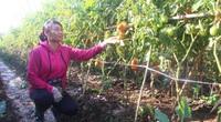 Ngày càng có nhiều tỷ phú nông dân ở Thủ đô Hà Nội