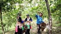 Nghệ An: Trên trồng chanh leo, dưới nuôi gà đen, dân bản Mông vùng biên thoát nghèo ngoạn mục