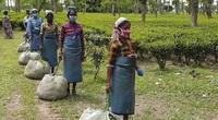 Người lao động, nông dân nghèo ở Ấn Độ điêu đứng do ảnh hưởng của đại dịch Covid-19