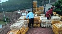 Giá gia cầm hôm nay 24/11: Hàng dễ bán, người nuôi gà thịt công nghiệp phấn khởi