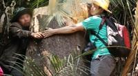 Vụ rừng bạch tùng trăm tuổi bị cưa hạ: Tỉnh Lâm Đồng chỉ đạo khẩn