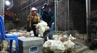 """Giá gia cầm hôm nay 25/11: Giá gà công nghiệp quay đầu giảm, chủ trại """"bốc hơi"""" cả trăm triệu sau 1 đêm"""