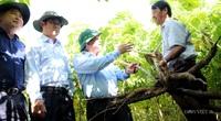 Thắp lại hy vọng cho người trồng sắn: Tìm ra bộ giống kháng bệnh khảm lá, năng suất vượt trội