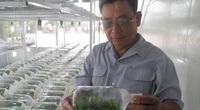 TP.HCM: Nông nghiệp công nghệ cao biến đất cằn, ruộng hoang thành cánh đồng tiền tỷ