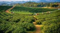 Mô hình trồng rau hữu cơ không sử dụng thuốc trừ sâu tại Ấn Độ