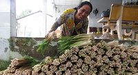 Hậu Giang: Thứ rau đồng hoang trước vứt đi không xuể, nay nhặt về trồng dưới mương, hái được bó nào lái khuân hết sạch
