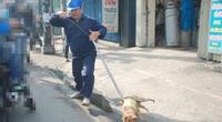154 nhân viên thú y sắp mất việc, Chi cục Chăn nuôi và Thú y Hà Nội nói gì?