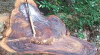 Tuyên Quang: Khởi tố vụ án phá rừng đặc dụng tại Na Hang sau loạt bài điều tra của PV Dân Việt