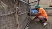 Phú Thọ: Dân nuôi cá lồng trên sông Đà cứ mở mắt ra là mất hàng chục triệu đồng