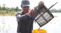 Trăm cách đánh bắt cá tôm mùa nước nổi ở miền Tây, nhưng lạ nhất là họp chợ bán cá